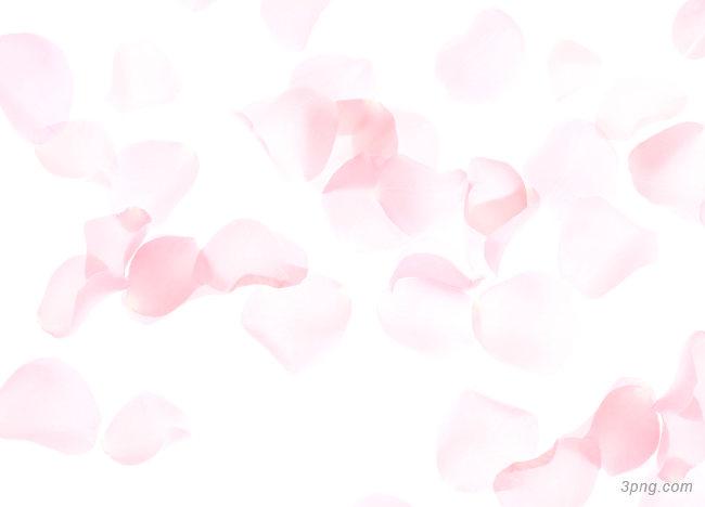 浅色粉色花瓣背景背景高清大图-浅色背景淡雅/清新/唯美