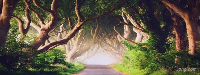 森林banner背景高清大图-森林背景淡雅/清新/唯美