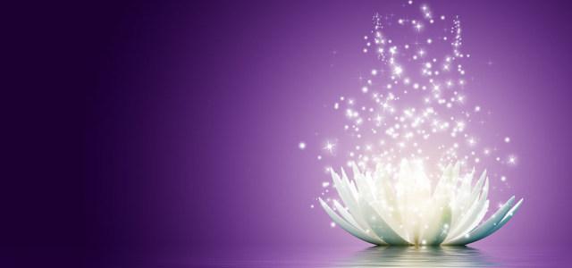 紫色花海背景高清背景图片素材下载