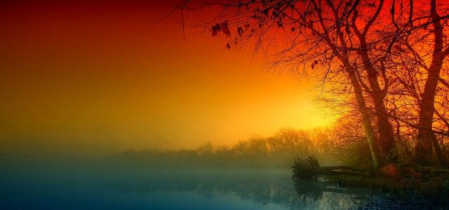 夕阳下的树林