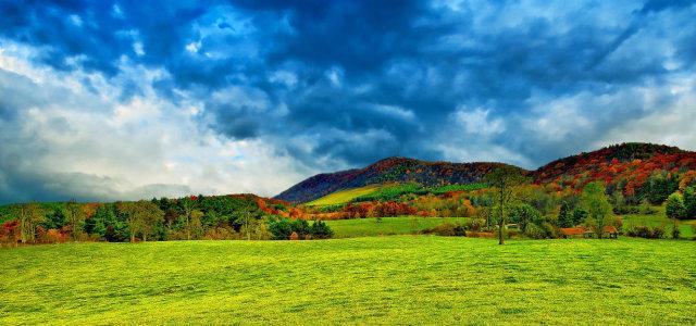 天空草地树林背景