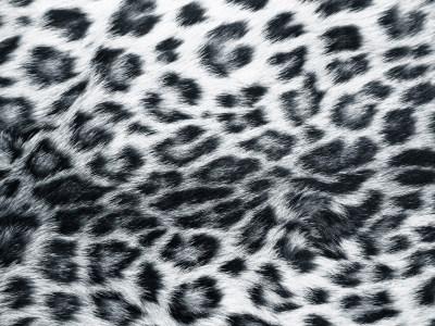 动物皮毛纹理高清背景