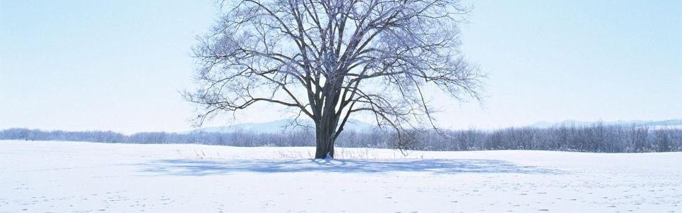 树林雪地高清背景图片素材下载