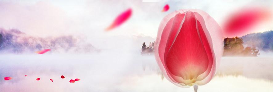 粉色花瓣风景背景