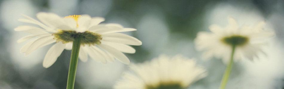 淘宝温馨淡雅白色花朵海报广告背景