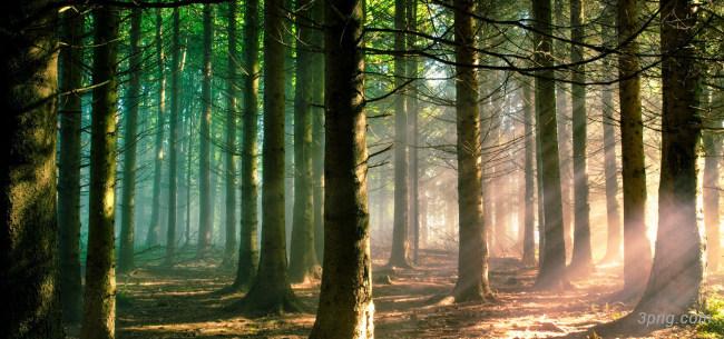 树林背景背景高清大图-树林背景其他图片
