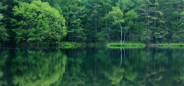 树林河流背景