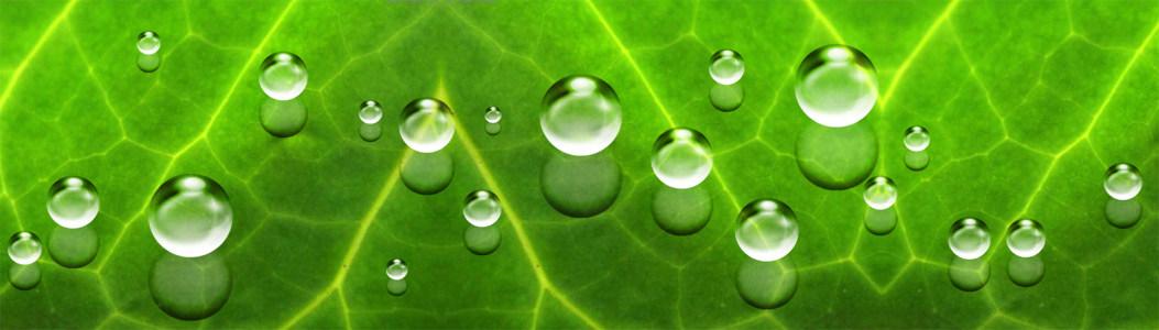 清新绿色水珠背景