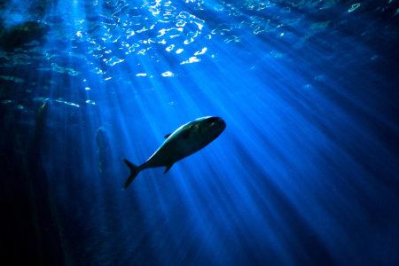海底高清背景图片素材下载