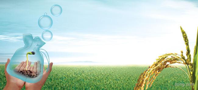 农业农作物稻米希望发芽背景banner背景高清大图-稻米背景Banner海报