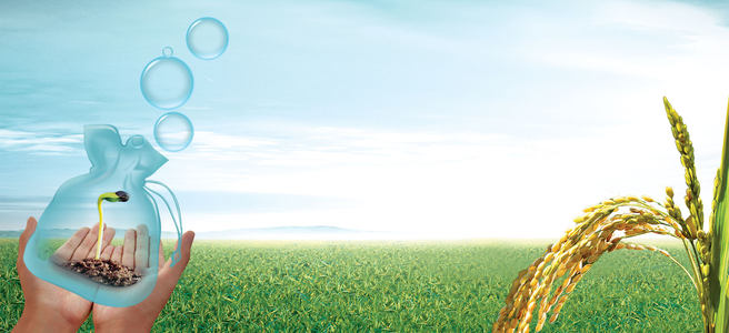农业农作物稻米希望发芽背景banner