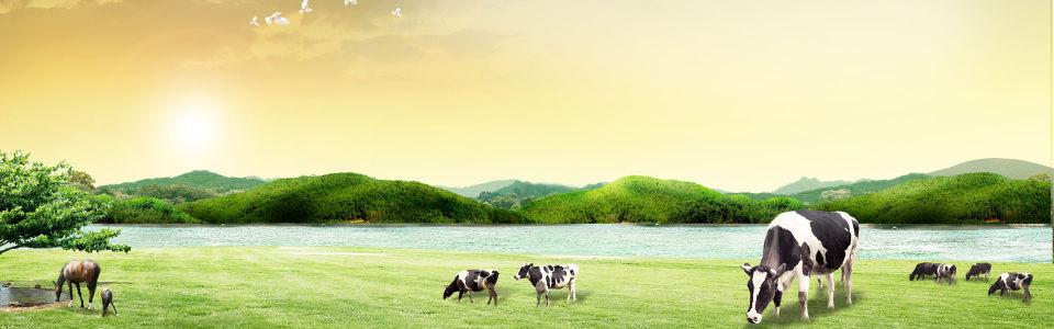 绿山草地背景