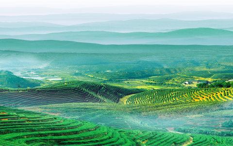 茶山背景高清背景图片素材下载