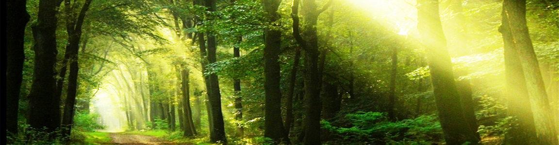 梦幻森林背景高清背景图片素材下载