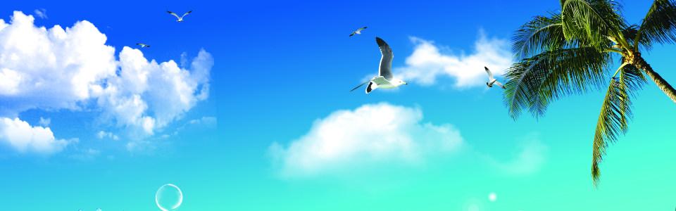 蓝天 海鸥 椰树 背景图