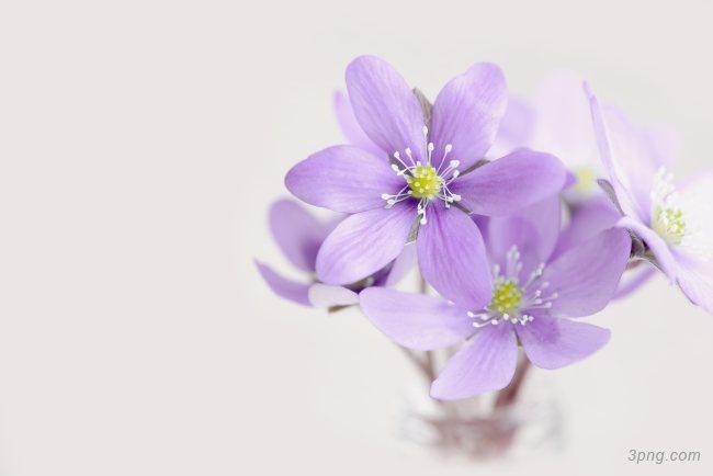 紫色的花背景背景高清大图-紫色背景淡雅/清新/唯美