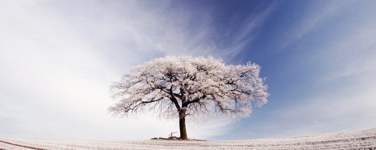冬季雾凇淘宝背景图