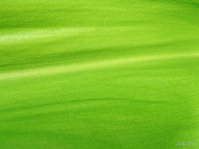 绿叶纹路纹理背景背景高清大图-绿叶背景底纹/肌理