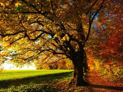 树林高清背景