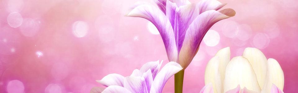 大气紫色梦幻花朵