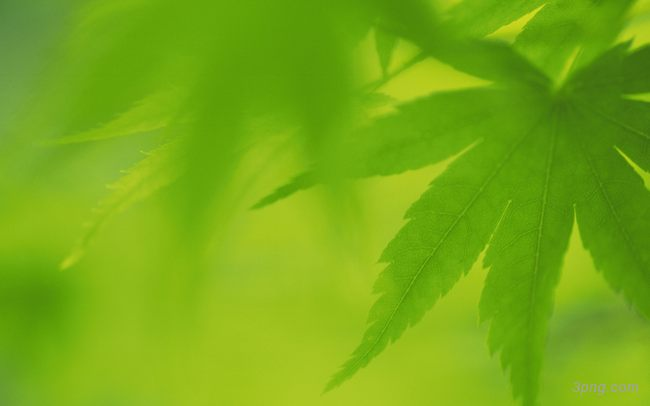 绿叶背景高清大图-绿叶背景其他图片