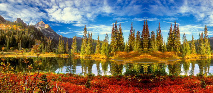 风景湖中倒影松树林背景banner