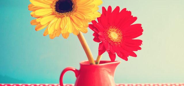 杯子里的鲜花
