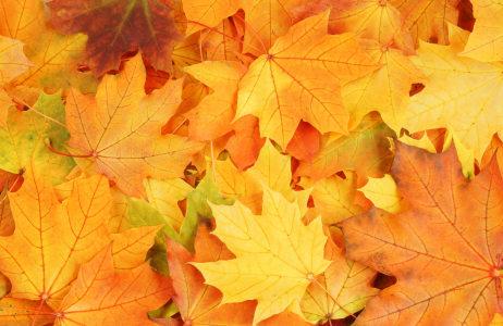 树叶背景高清背景图片素材下载