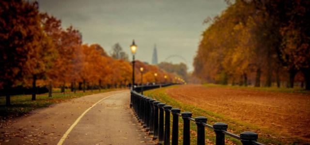 秋季自然风光背景