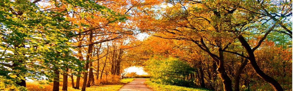 深秋落叶之美海报背景高清背景图片素材下载