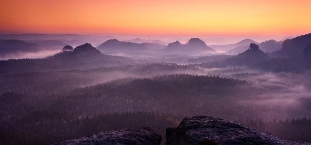 夕阳树林背景