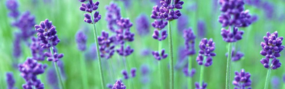 花朵背景 唯美背景