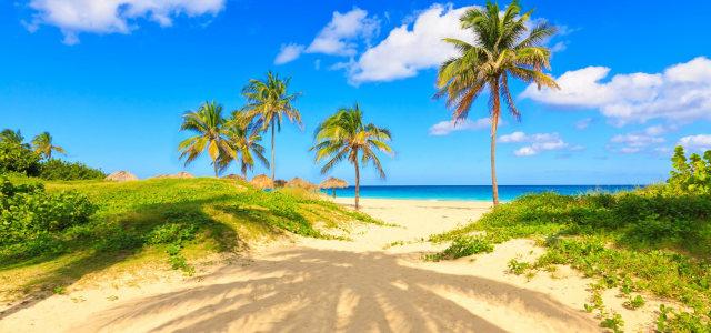 海边沙滩椰树背景