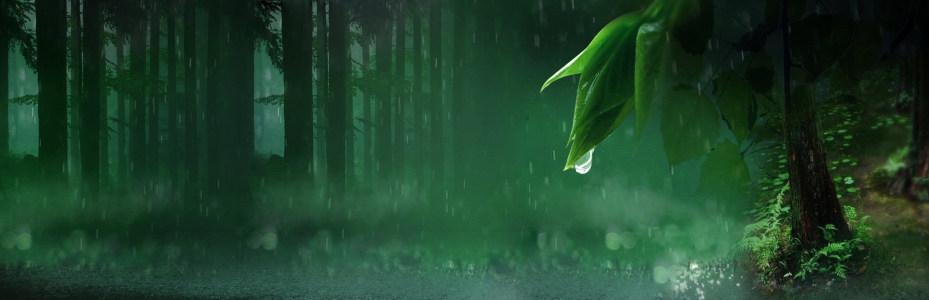树林背景高清背景图片素材下载