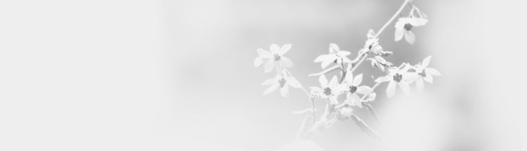 简约花朵背景高清背景图片素材下载