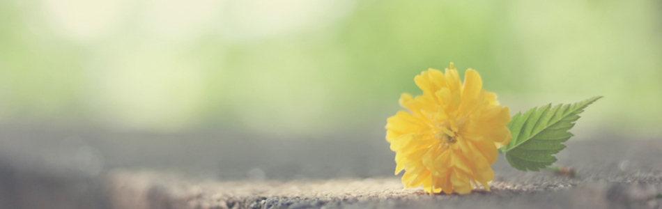 清新黄色花朵海报背景