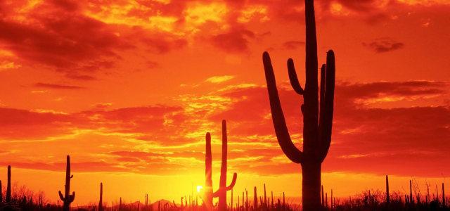 夕阳仙人掌背景