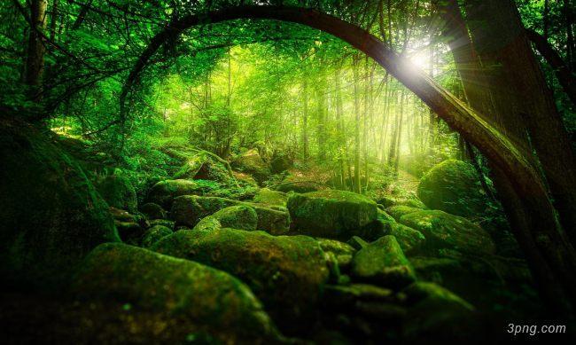 森林背景高清大图-森林背景其他图片
