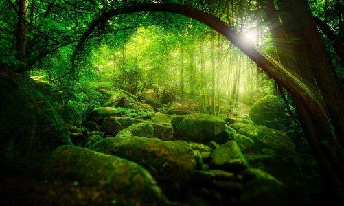 森林高清背景图片素材下载
