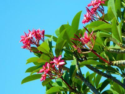 春天树叶高清背景图片素材下载