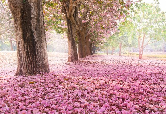 浪漫的春天公园背景背景高清大图-春天背景底纹/肌理