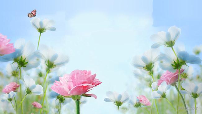 清新花朵背景背景高清大图-花朵背景淡雅/清新/唯美