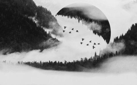 黑白森林背景