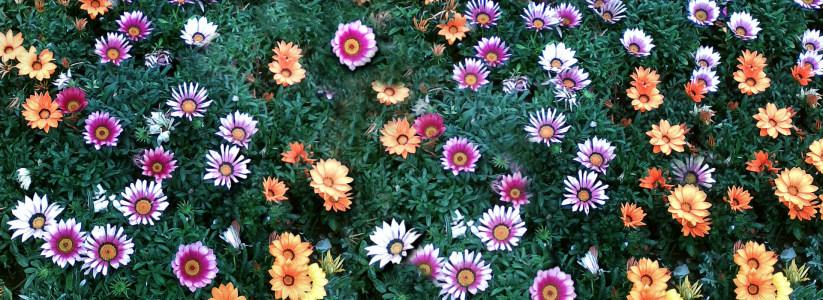 淘宝草地花朵背景