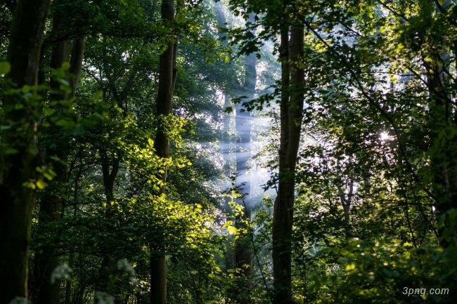 森林背景背景高清大图-背景背景其他图片