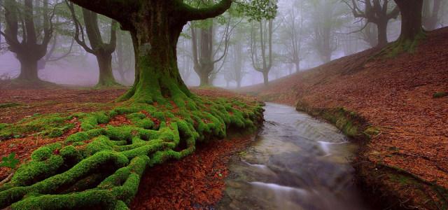 河流小溪树林背景高清背景图片素材下载
