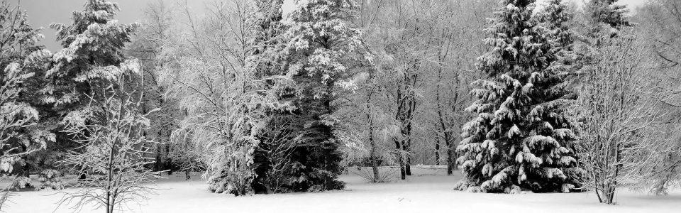 雪景森林高清背景图片素材下载