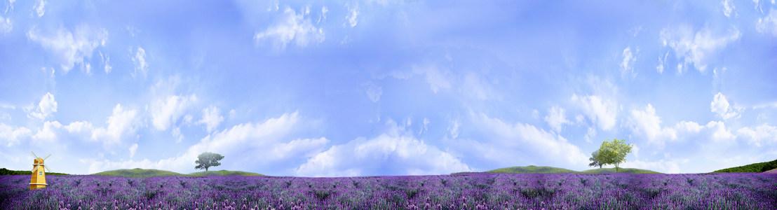 薰衣草园背景