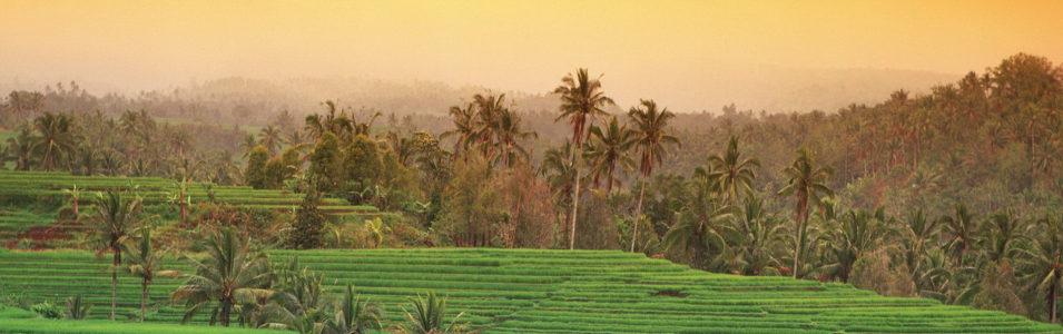 椰树林banner创意设计