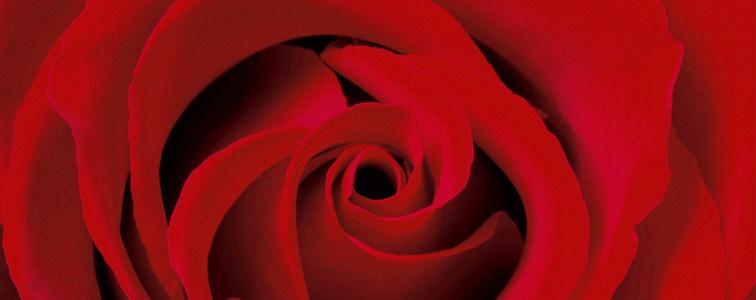 大气红色玫瑰花海报背景高清背景图片素材下载